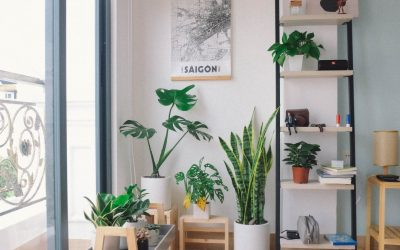 Prevent Holiday Stress with Houseplants